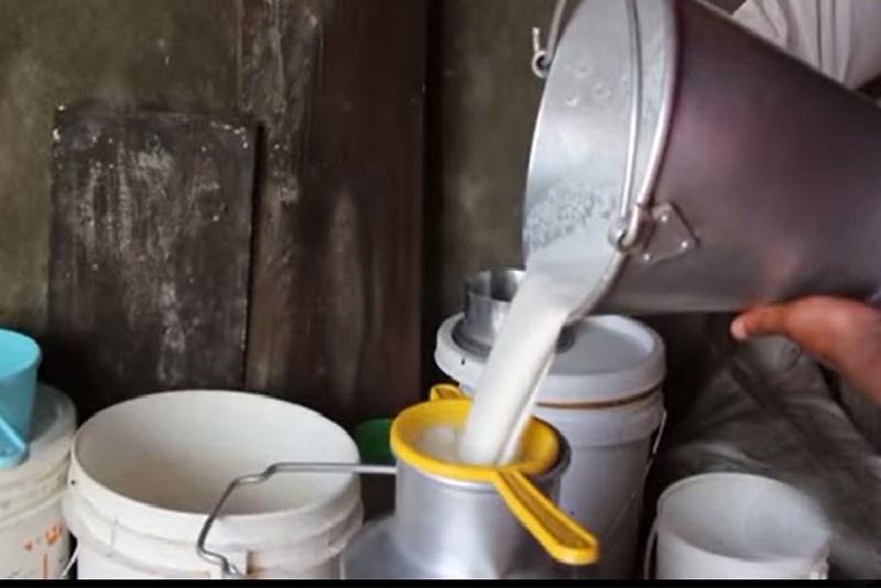 सल्यानमा उत्पादन भयो २ करोड लिटर दूध